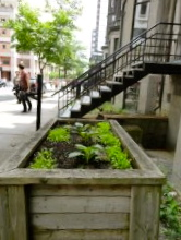 Garden on Mackay St