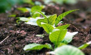 crop_planning
