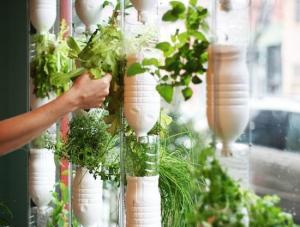 how-to-build-a-window-farm