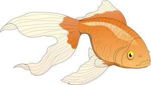 Gold_fish_clip_art-31