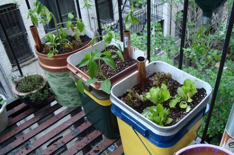 http://www.networx.com/article/how-to-make-self-watering-containers-for