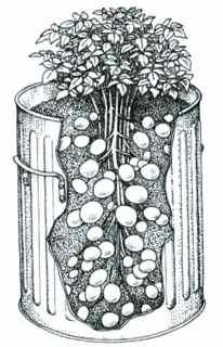 potato-bin-cross-section