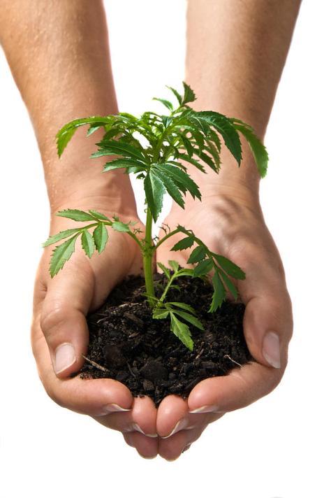 hands-holding-seedling-planted-in-soil-brooke-whatnall
