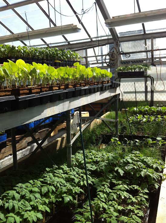 Concordia Greenhouse plants