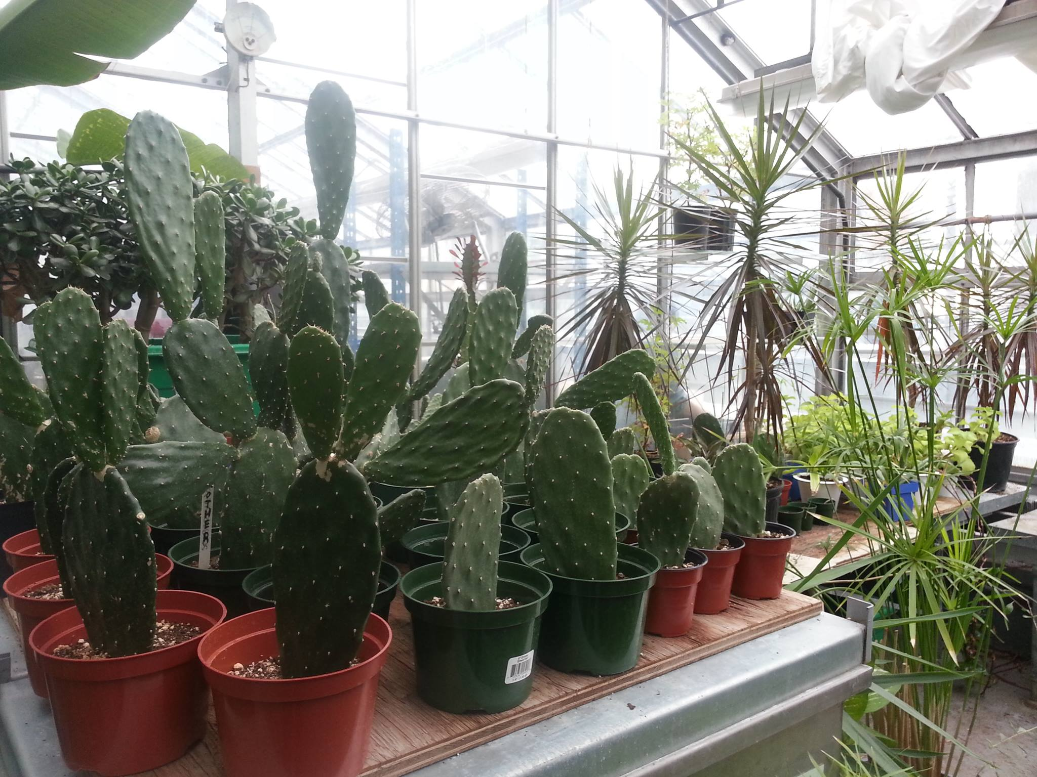 House plant sale 2016 | The Concordia Greenhouse on floral greenhouse, botany greenhouse, snow greenhouse, outdoor greenhouse, bonsai greenhouse, gardening greenhouse, white greenhouse, horticulture greenhouse, conservatory greenhouse, tree greenhouse, green greenhouse, indoor greenhouse, vegetable greenhouse, plants greenhouse, spring greenhouse, weed greenhouse, tropical greenhouse, container greenhouse, nursery greenhouse, home greenhouse,