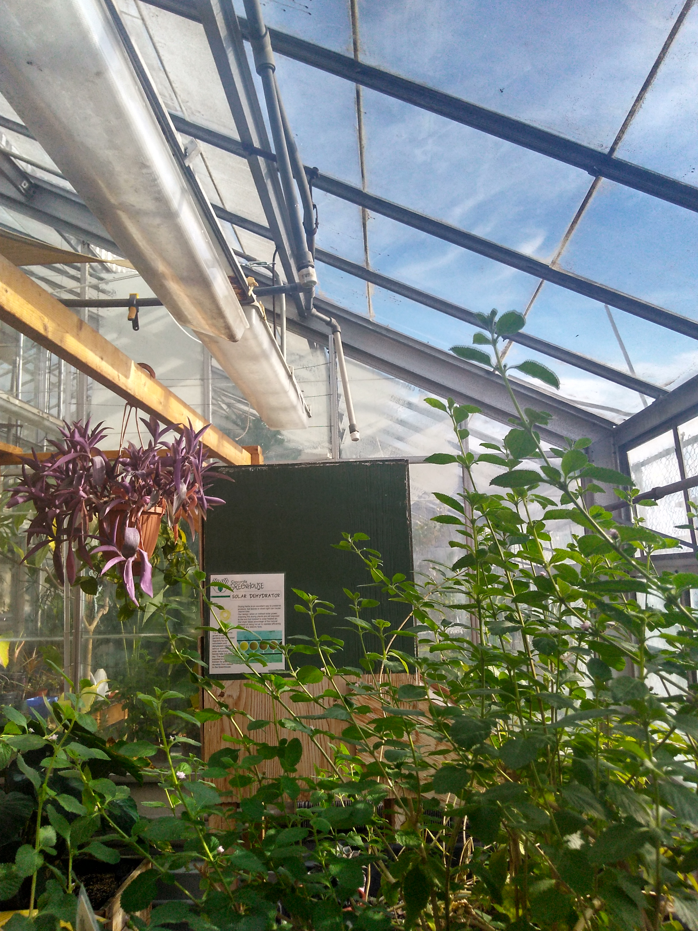 canada gardening tunnel growing online at buy aosom in greenhouse walk outsunny garden portable plant greenhouses