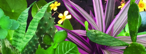 PlantSale_March2019_fb_banner