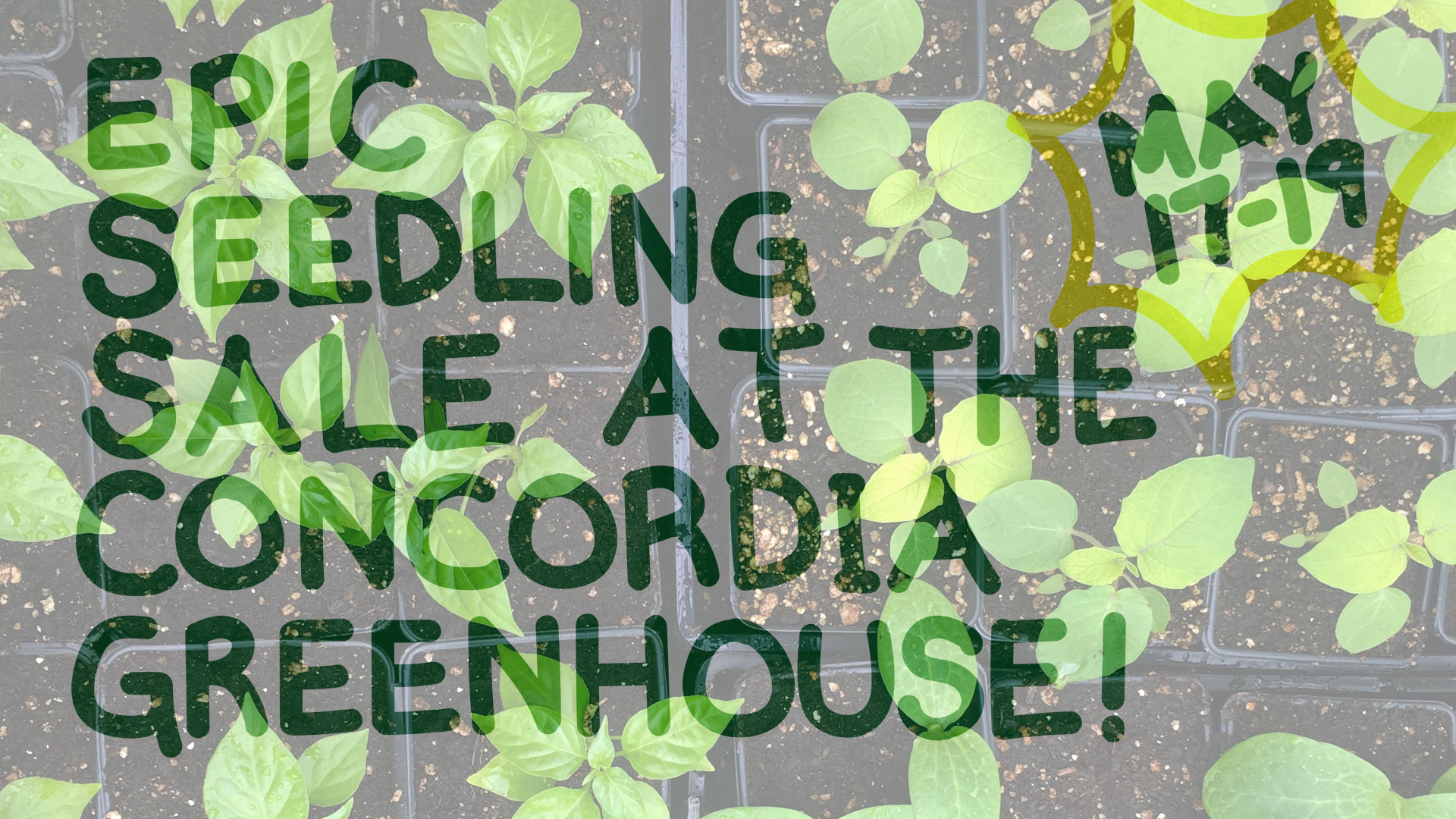 GH_Facebook_banner_Epic_seedling_sale_version4_small