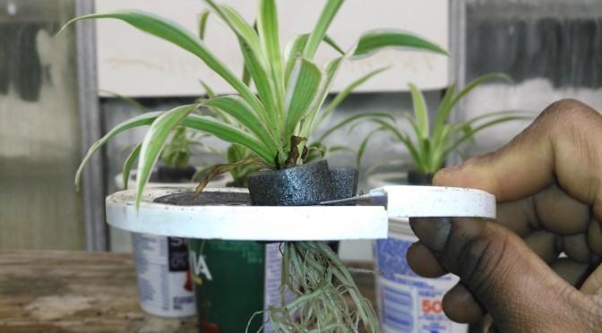 Hydroflora: Plant Propagation 101